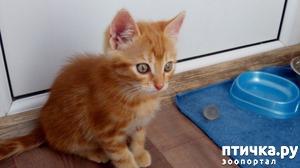 фото: Рыжий котенок