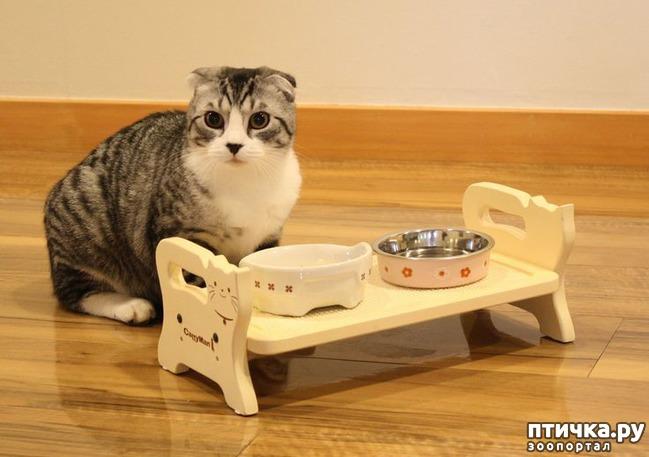 фото 2: А так ли все равно кошке, где вы ее кормите?))