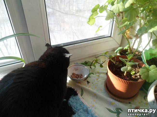 фото 3: А так ли все равно кошке, где вы ее кормите?))