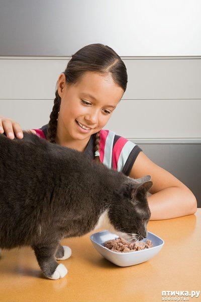 фото 7: А так ли все равно кошке, где вы ее кормите?))