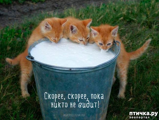 фото 8: А так ли все равно кошке, где вы ее кормите?))