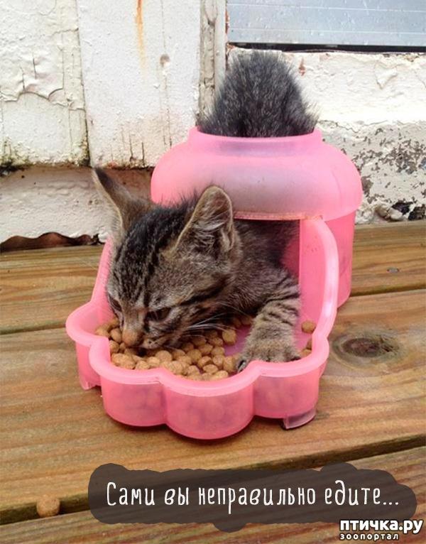 фото 10: А так ли все равно кошке, где вы ее кормите?))