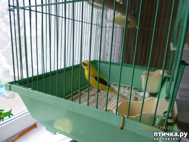 фото 1: Я - заливистая птичка, Желтогрудая певичка... (Помогаем выбрать имя)