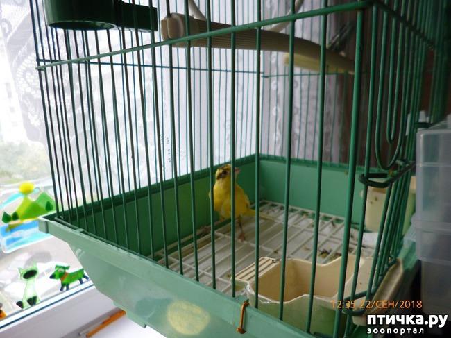 фото 2: Я - заливистая птичка, Желтогрудая певичка... (Помогаем выбрать имя)