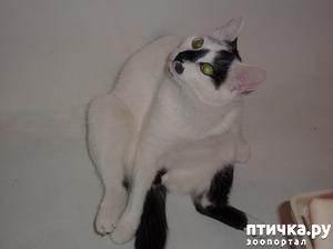 фото: Про кота Зяму, единственного пацана в кошачьей стае)))