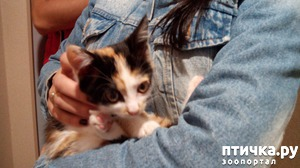 фото: Еще один котенок нашел дом