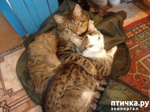фото: Мои котики.
