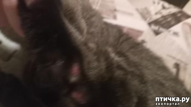 фото 1: У кота болячки на лапах, нужен совет