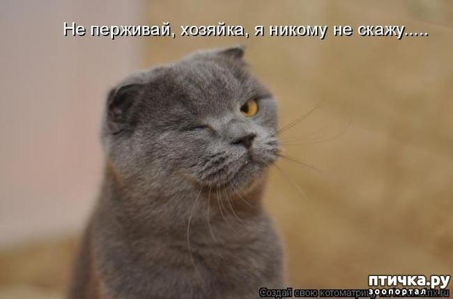 Картинки коты приколы читать, поздравление
