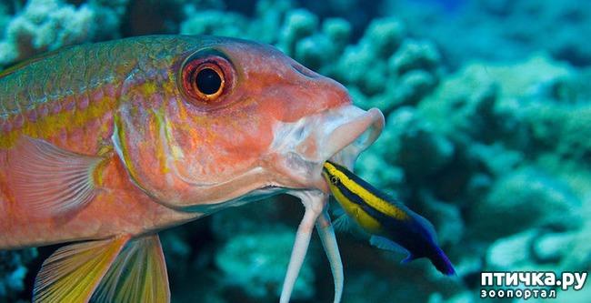 фото 5: Как и почему меняют пол рыбы