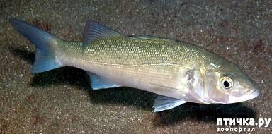 фото 2: Как и почему меняют пол рыбы
