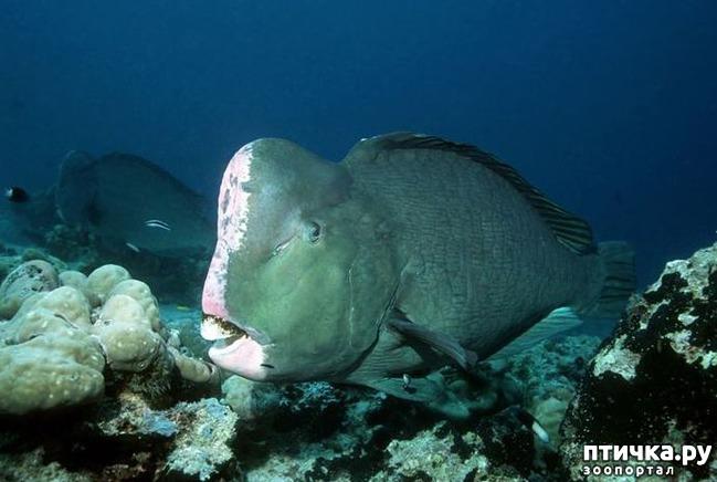 фото 6: Как и почему меняют пол рыбы