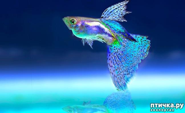 фото 1: Как и почему меняют пол рыбы
