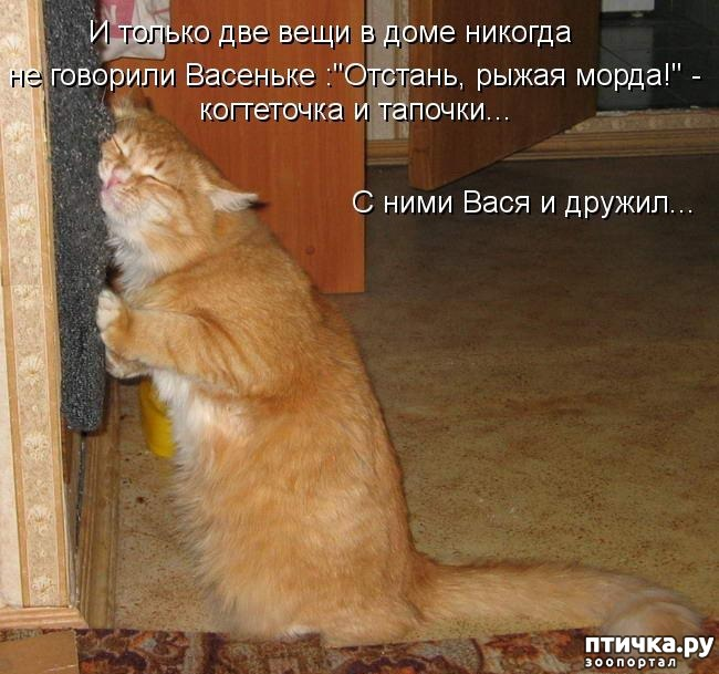 Кот картинка но я должен кричать