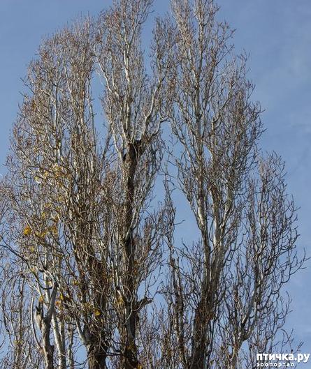 фото 3: Сороки - птицы особенные