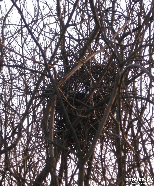 фото 10: Сороки - птицы особенные