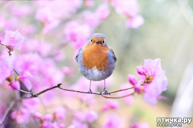 фото 2: День птиц!