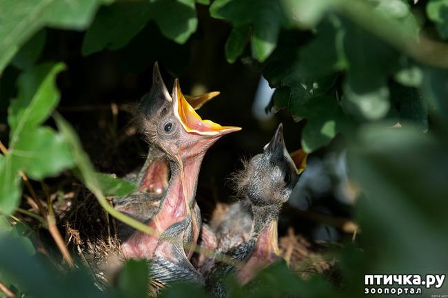 фото 5: День птиц!