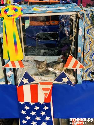 """фото: Выставка кошек """"Кэтсбург"""" 2019!!!"""