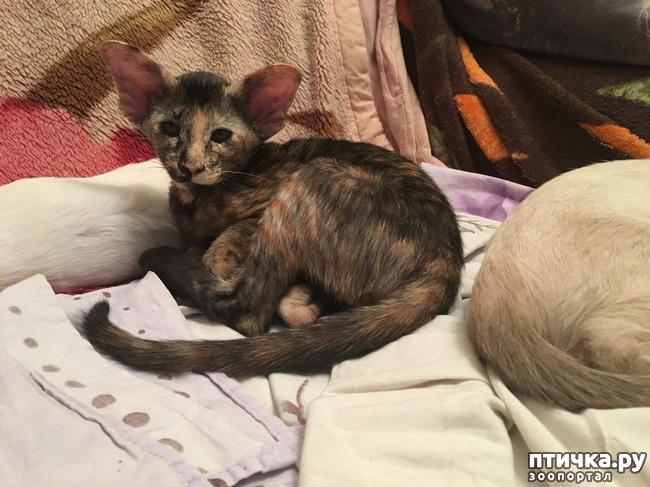 фото 2: А у нас есть котятки