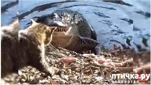 фото: Кошка - далеко не самый слабый зверь