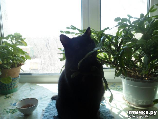 фото 3: Весеннее настроение)))