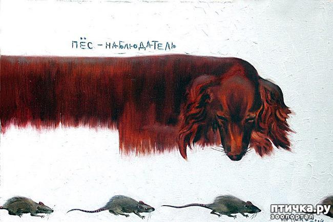 фото 7: И снова о собаках в живописи