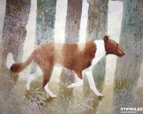 фото 11: И снова о собаках в живописи