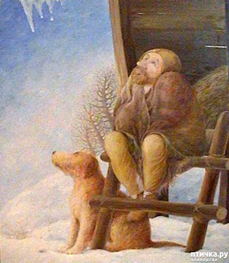 фото 10: И снова о собаках в живописи