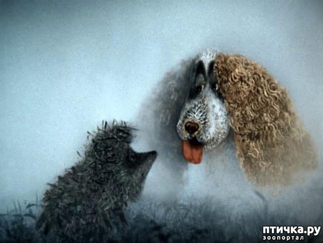 фото 22: И снова о собаках в живописи
