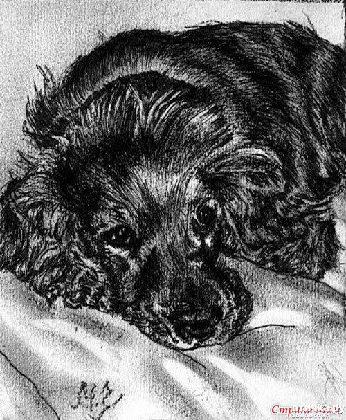 фото 30: И снова о собаках в живописи