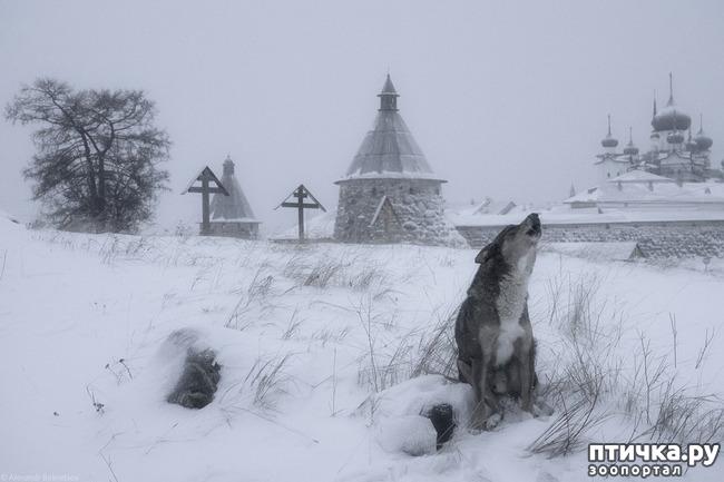 фото 31: И снова о собаках в живописи
