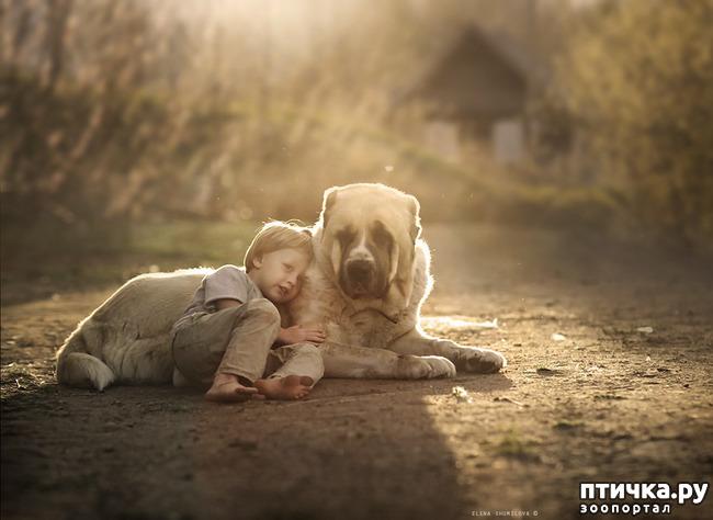 фото 32: И снова о собаках в живописи