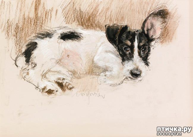 фото 28: И снова о собаках в живописи