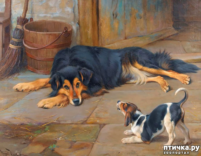 фото 35: И снова о собаках в живописи