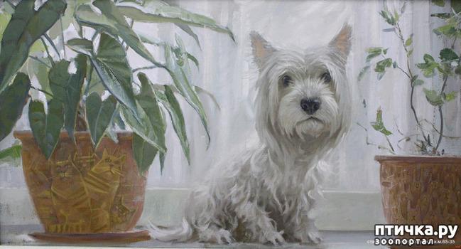 фото 29: И снова о собаках в живописи