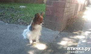 фото: Собачья преданность