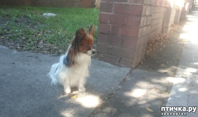 фото 1: Собачья преданность
