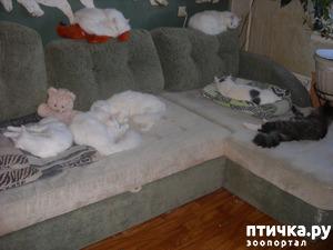 фото: Лежбище котиков или спят усталые игрушки.