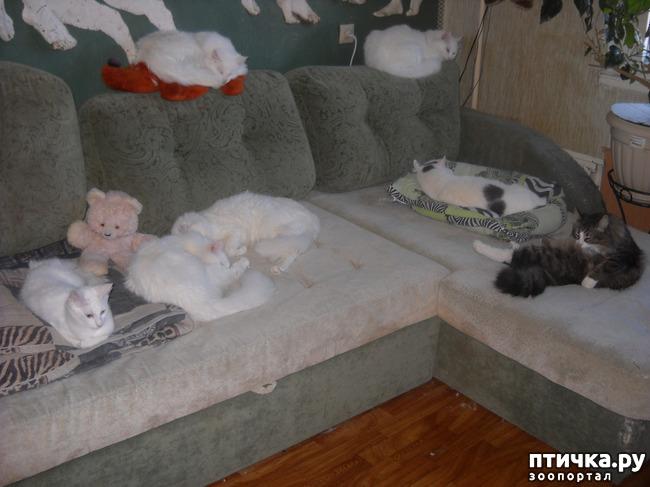 фото 2: Лежбище котиков или спят усталые игрушки.