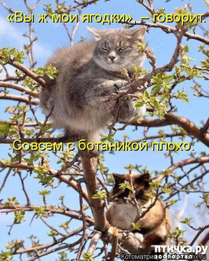фото: Весенние веселые коты)))