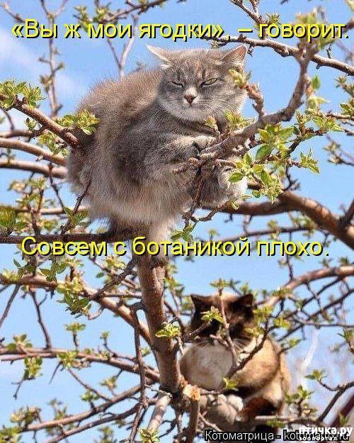 фото 1: Весенние веселые коты)))