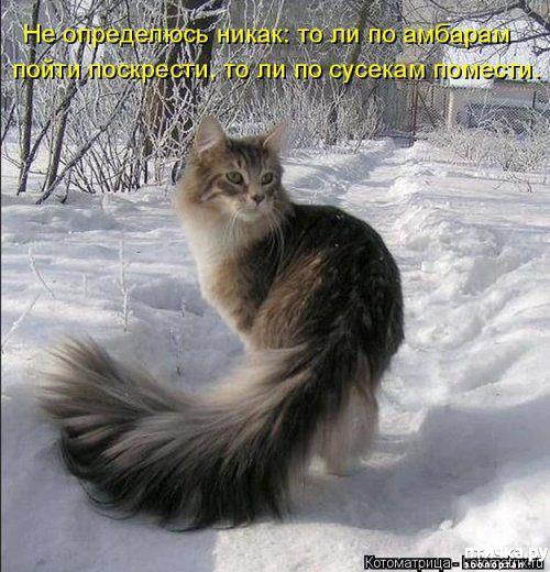 фото 2: Весенние веселые коты)))