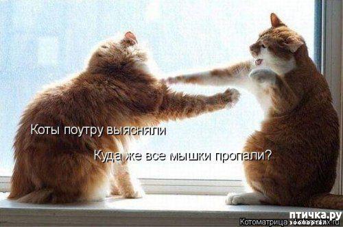 фото 3: Весенние веселые коты)))