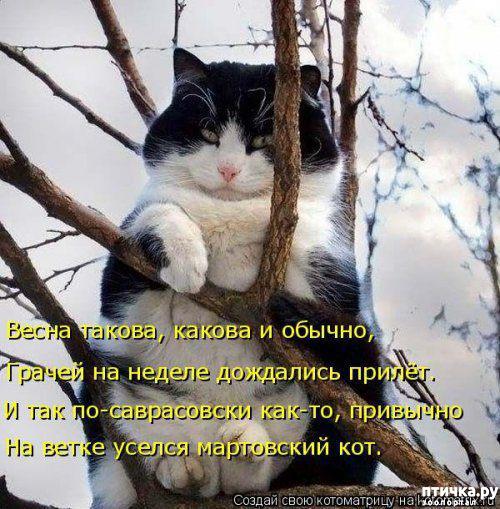 фото 4: Весенние веселые коты)))