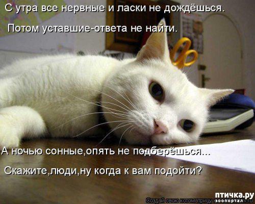 фото 5: Весенние веселые коты)))