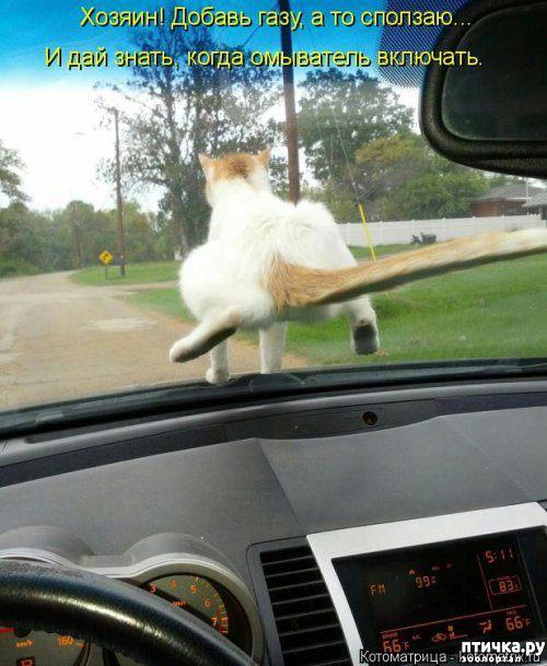 фото 6: Весенние веселые коты)))