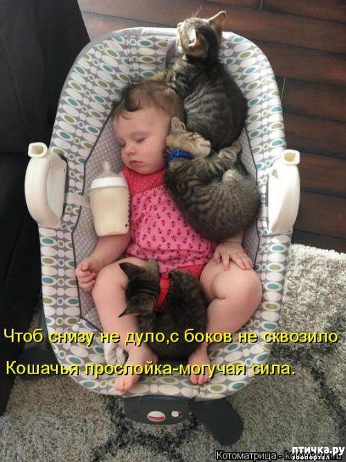 фото 7: Весенние веселые коты)))