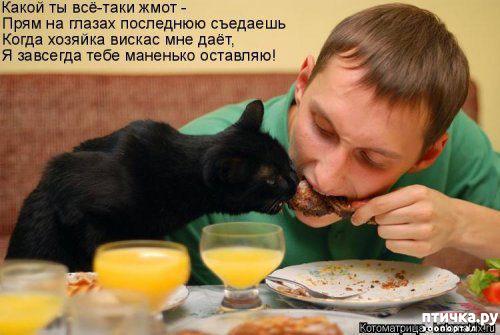 фото 8: Весенние веселые коты)))