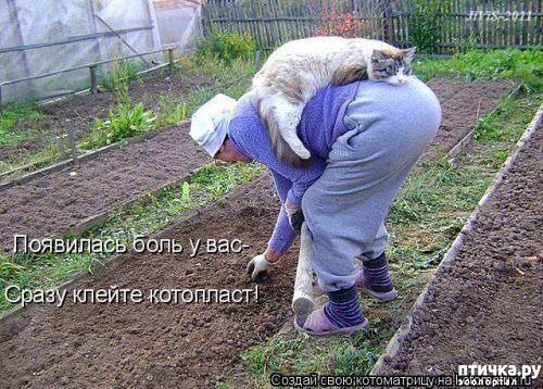 фото 9: Весенние веселые коты)))